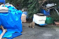 Today's Cat@2018-10-20 (masatsu) Tags: cat thebiggestgroupwithonlycats catspotting cameraphone apple softbank iphone