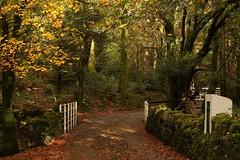 Autumn Colour. (mcginley2012) Tags: autumn fall road ireland connemara nature colour bridge railing postbox fern wall trees moss leaves
