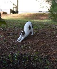 """""""I'm chill."""" (rootcrop54) Tags: patchtabby neighborhood cat teenager friendly cute sweet neko macska kedi 猫 kočka kissa γάτα köttur kucing gatto 고양이 kaķis katė katt katze katzen kot кошка mačka gatos maček kitteh chat ネコ"""