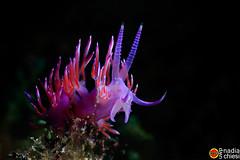_B5A8514-25092018-Villas_copia (azotati2011) Tags: verde sardegna nimarhousing nimarunderwaterhousing canon7dmkii pronimarunderwaterhousing mediterraneo macro underwaterphotography
