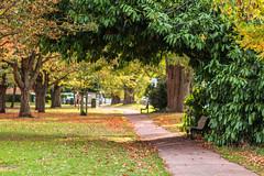 Autumn has arrived at Park Lammas Land, Cambridge (__evi__) Tags: cambridge park bench autumn green herbst england
