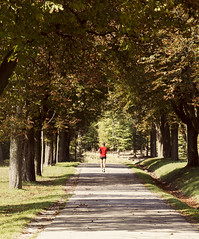 Autumn Alley (CoolMcFlash) Tags: autumn tree alley fall person running jogging vienna sport canon eos 60d red tones nature outdoor herbst bäume baum allee laufen jogger wien fotografie photography lainzer tiergarten candid tamron b008 18270