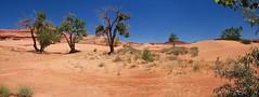 Dune panorama... 20110622_8609-12-15 (listorama) Tags: usa utah whitewashsanddunes panorama