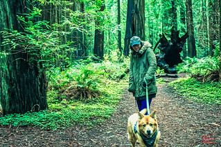 FIZZY & BANDIT HUMBOLDT-REDWOODS-TRAIL © Cody Jacobson-ZEN MOUNTAIN MEDIA all rights reserved