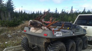 Newfoundland Caribou Hunt, Moose, Bear Hunting 26