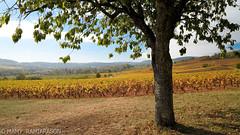 Paysage de Bourgogne en automne (Mamyarason) Tags: extérieur burgundy paysage vigne régionbourgognefranchecomté mamyramiarason saintmartinsousmontaigu france saôneetloire autumn vignoble automne nikond750 vineyard vignobledebourgogne