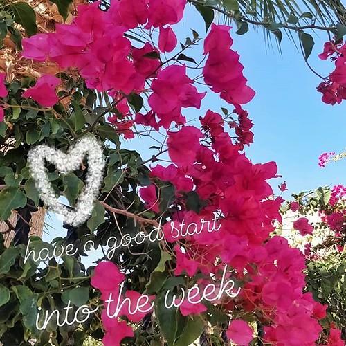 Guten Start in die Woche 👌💕 Have a good start into the week 💙👍 Comienza bien la semana #mondaymorning
