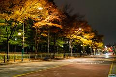 Night street (Tachial) Tags: fe 50mm 소니 sigma street sony fullframe lce7rm3 a7r3 authom 양천구 서울특별시 대한민국 kr
