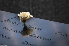 Birthday Rose for the Fallen (allentimothy1947) Tags: 911memorial newyorkstate cloudy newyorkcity rose memorial birthday white flower georgeallanes age33 worldtradecenter died water monument marble engraved beauty memory honor dedication