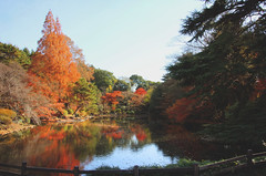 Calm (arbivi) Tags: autumn fall foliage koyo momiji japanese maple tree red orange shinjukugyoen shinjuku park tokyo japan canon 60d tamron arbivi raymondviloria