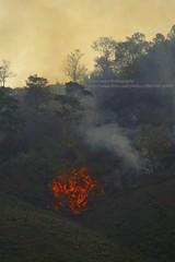 Near Chiang Khan, bushfire (blauepics) Tags: thailand east chiang khan scenery landschaft landscape thai trees bäume field feld agriculture landwirtschaft rural ländlich bush busch fire feuer flames flammen smoke rauch