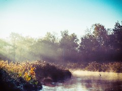 (philippe baumgart) Tags: alsace elsass daubensand ried morning nature river landscape forest autumn