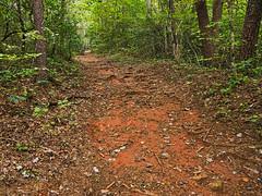 Falls Creek Trail #31 - 2 (MarksPhotoTravels) Tags: greenvillecounty southcarolina trail