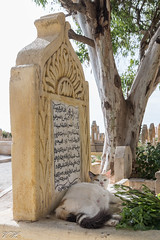 2018/07/06 17h48 chat du cimetière de Salé (Valéry Hugotte) Tags: 24105 maroc rabat canon canon5d canon5dmarkiv cat chat gatos katze tombe tombeau cimetière salé