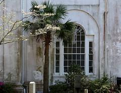 The Second Presbyterian Church (1811) from the churchyard (north side), Charleston, SC (Spencer Means) Tags: dwwg church second presbyterian style jeffersonian antebellum window churchyard arch meeting street charleston sc southcarolina palmetto wall