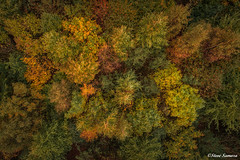 Above the canopy, Autumn colour (Steve Samosa Photography) Tags: boldforestpark autumntrees autumn trees sthelens england unitedkingdom gb themerseyforest autumncolour aerial aerialview aerialshot dronecamera droneshot drones dream suttonmanor st