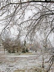71868921 (aniaerm) Tags: snow ice frost