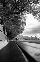 Plains of Abraham park, Quebec City - Plaines d'Abraham, Québec (soniamarmen) Tags: abraham plains quebec city bench park trees blackwhite
