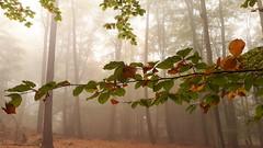 20181020_101653 Herbstfarben... - Autumn colors ... (baerli08ww) Tags: deutschland germany rheinlandpfalz rhinelandpalatinate westerwald westerforest wald forest herbst autumn fall herbstfarben autumncolors nebel fog mist samsung