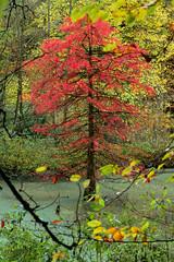 Glowing Tree (ARTUS8) Tags: nikon24120mmf40 flickr baum herbst nikond800 flus