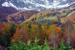 Otoño en valle de Pineta (Huesca). Parque Nacional de Ordena y Monte Perdido (joseange) Tags: concordians